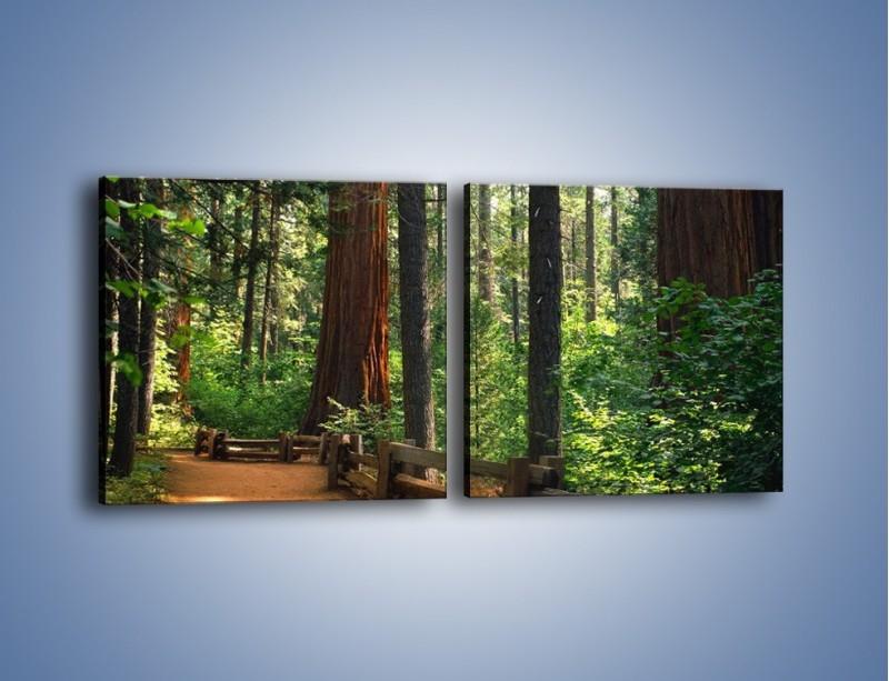 Obraz na płótnie – Chodźmy do lasu – dwuczęściowy kwadratowy poziomy KN611