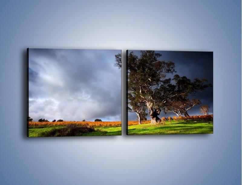 Obraz na płótnie – Burzowe chmury nad polaną – dwuczęściowy kwadratowy poziomy KN748
