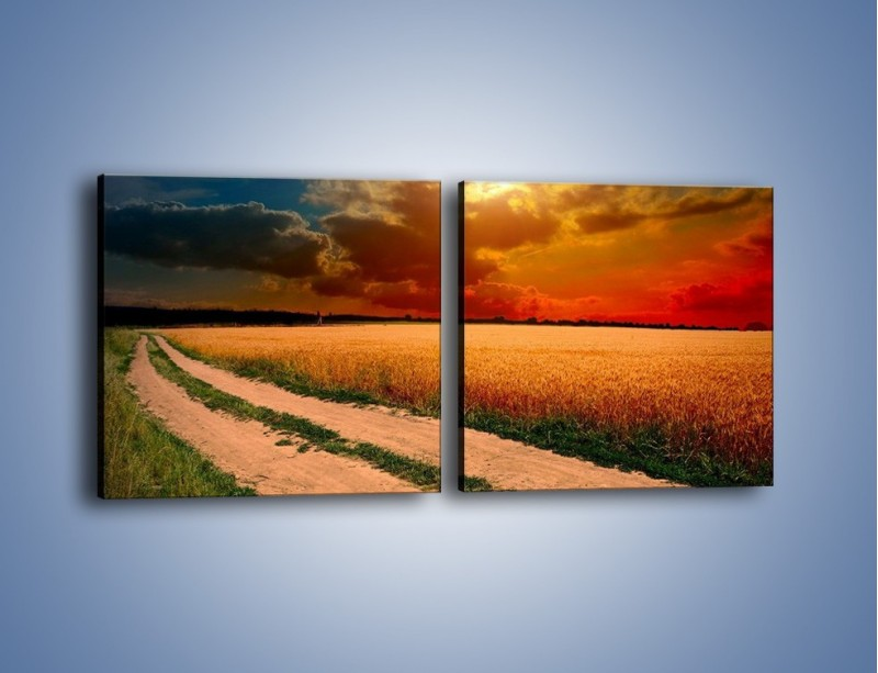 Obraz na płótnie – Zbożowa polana i jej cały urok – dwuczęściowy kwadratowy poziomy KN776