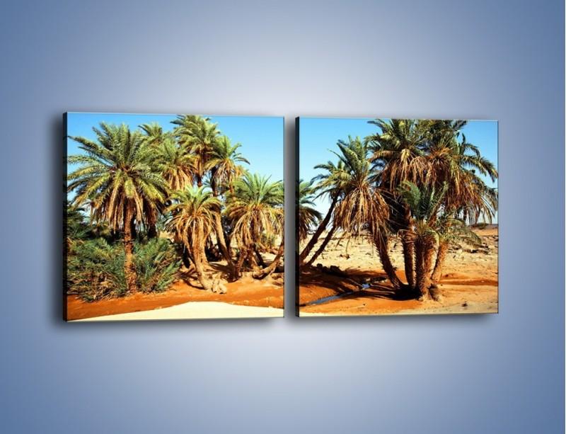 Obraz na płótnie – Palmowa rodzina w komplecie – dwuczęściowy kwadratowy poziomy KN809