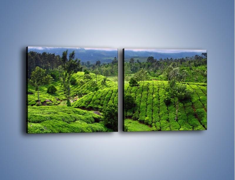 Obraz na płótnie – Rozległa zielona kraina – dwuczęściowy kwadratowy poziomy KN872