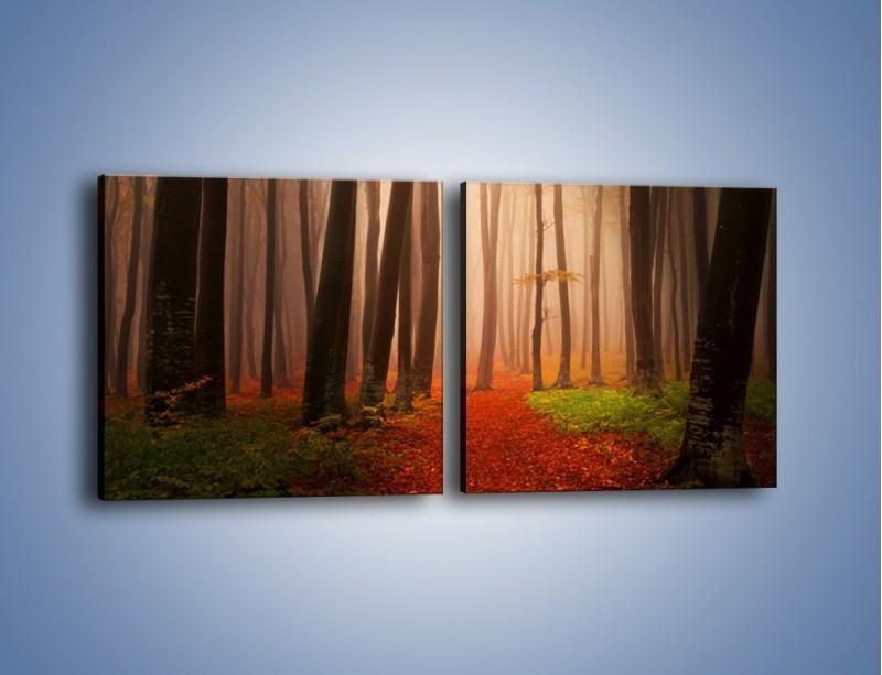 Obraz na płótnie – Las pełen tajemnic – dwuczęściowy kwadratowy poziomy KN909