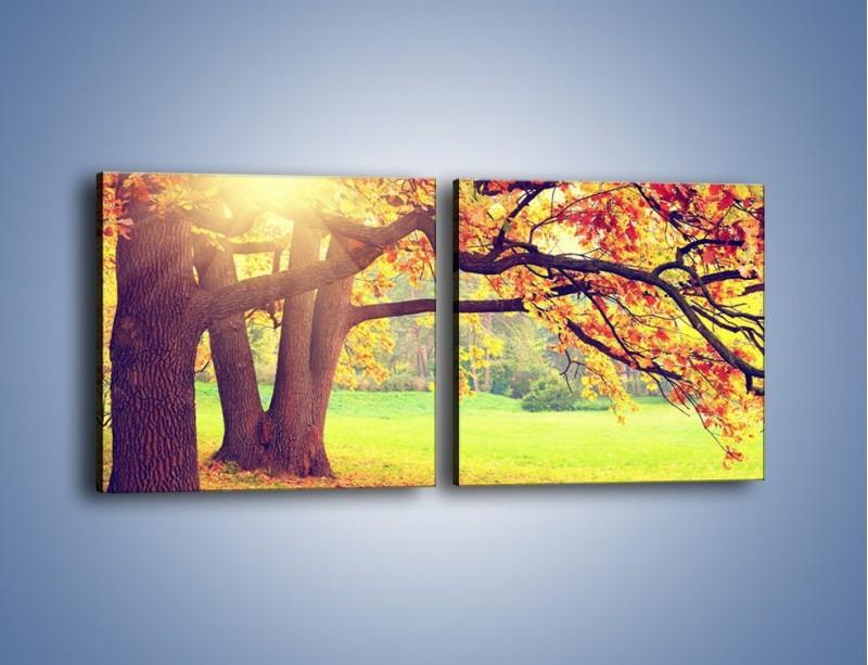 Obraz na płótnie – Jesienią w parku też jest pięknie – dwuczęściowy kwadratowy poziomy KN967