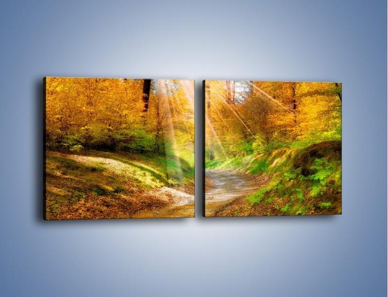 Obraz na płótnie – Promienną i słoneczną ścieżką przez las – dwuczęściowy kwadratowy poziomy KN989