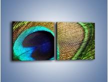 Obraz na płótnie – Cudowne pawie oko – dwuczęściowy kwadratowy poziomy O048