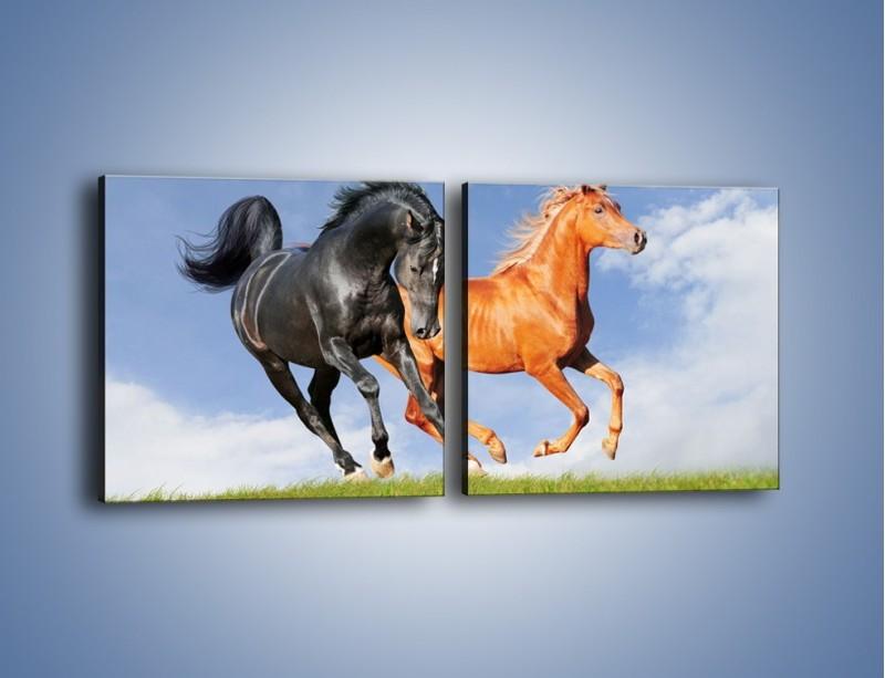 Obraz na płótnie – Czarny rudy i koń – dwuczęściowy kwadratowy poziomy Z241