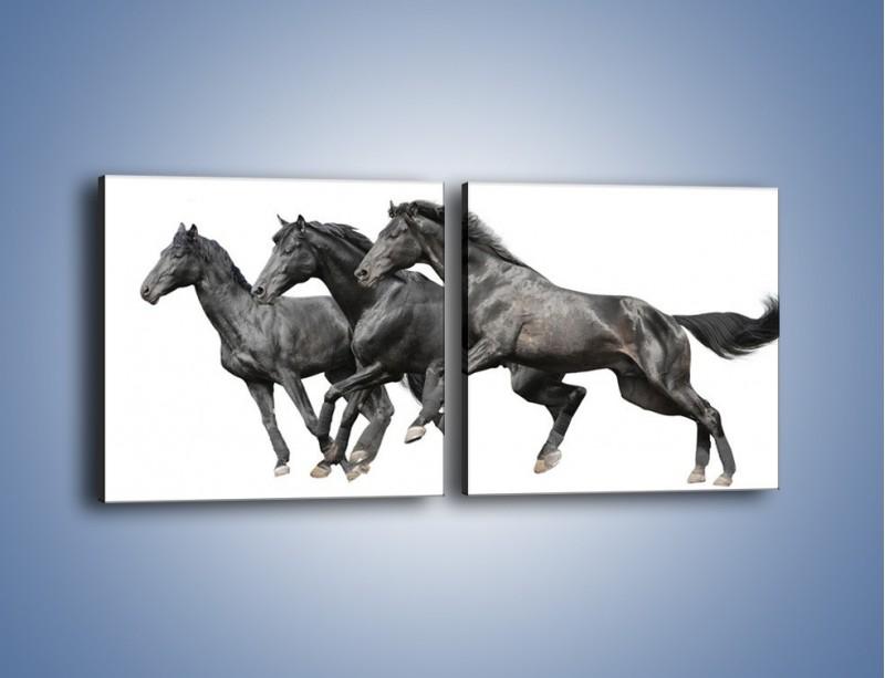 Obraz na płótnie – Kadrowe ujęcie mustanga – dwuczęściowy kwadratowy poziomy Z253