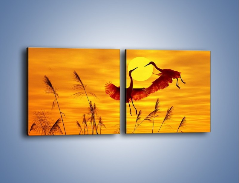 Obraz na płótnie – Czaple i zachód słońca – dwuczęściowy kwadratowy poziomy Z302
