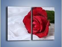 Obraz na płótnie – Bordowa róża na białej pościeli – dwuczęściowy prostokątny pionowy K1023