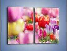Obraz na płótnie – Boso przez tulipany – dwuczęściowy prostokątny pionowy K344