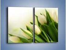 Obraz na płótnie – Białe tulipany na zgodę – dwuczęściowy prostokątny pionowy K400