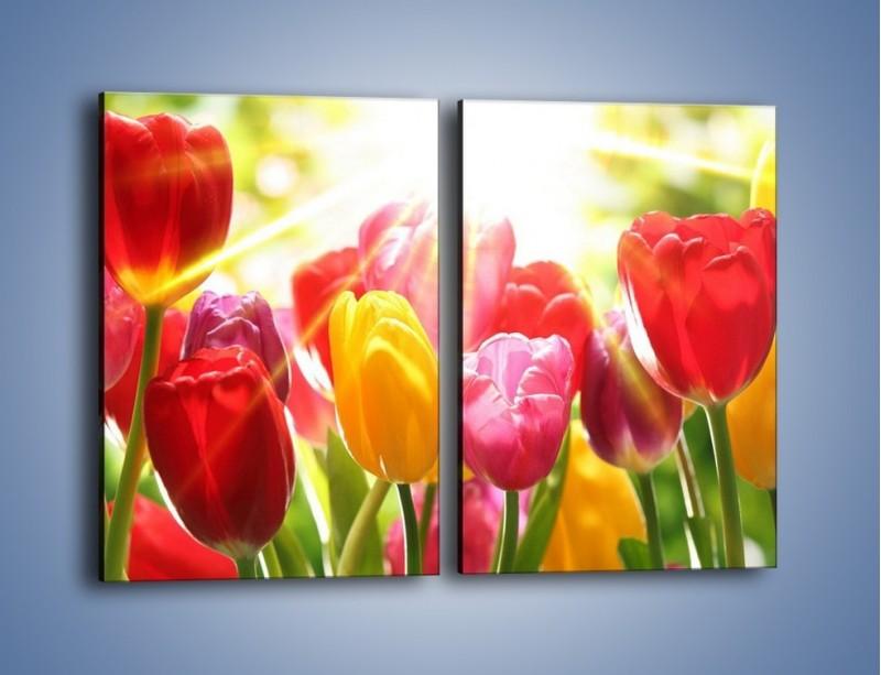 Obraz na płótnie – Bajecznie słoneczne tulipany – dwuczęściowy prostokątny pionowy K428