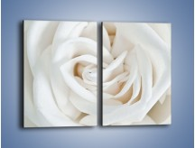 Obraz na płótnie – Biel róży za dnia – dwuczęściowy prostokątny pionowy K709