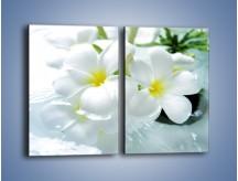 Obraz na płótnie – Białe kwiaty w potoku – dwuczęściowy prostokątny pionowy K991