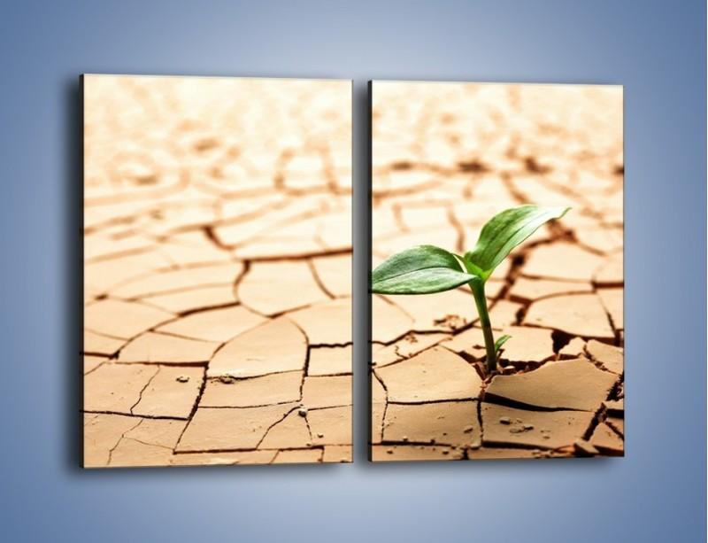 Obraz na płótnie – Łodyga w spękanej ziemi – dwuczęściowy prostokątny pionowy KN013