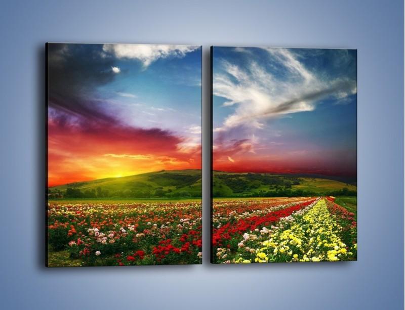 Obraz na płótnie – Uprawy kolorowych róż – dwuczęściowy prostokątny pionowy KN060