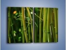 Obraz na płótnie – Bambusowe łodygi z bliska – dwuczęściowy prostokątny pionowy KN118