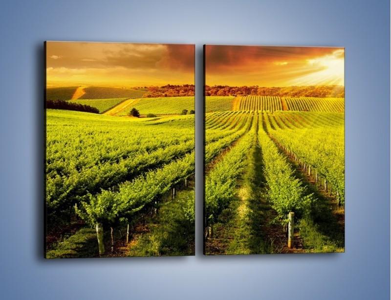 Obraz na płótnie – Plantacja w stronę słońca – dwuczęściowy prostokątny pionowy KN1180A
