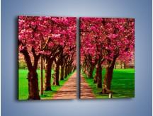 Obraz na płótnie – Aleja kwitnącej wiśni – dwuczęściowy prostokątny pionowy KN1238A