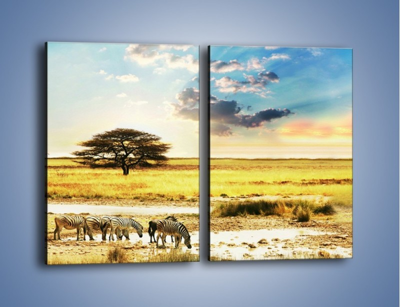 Obraz na płótnie – Zebry na sawannie – dwuczęściowy prostokątny pionowy KN1298A