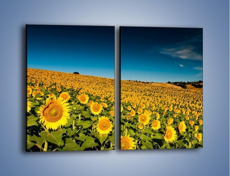 Obraz na płótnie – Słonecznikowe uśmiechnięte główki – dwuczęściowy prostokątny pionowy KN205