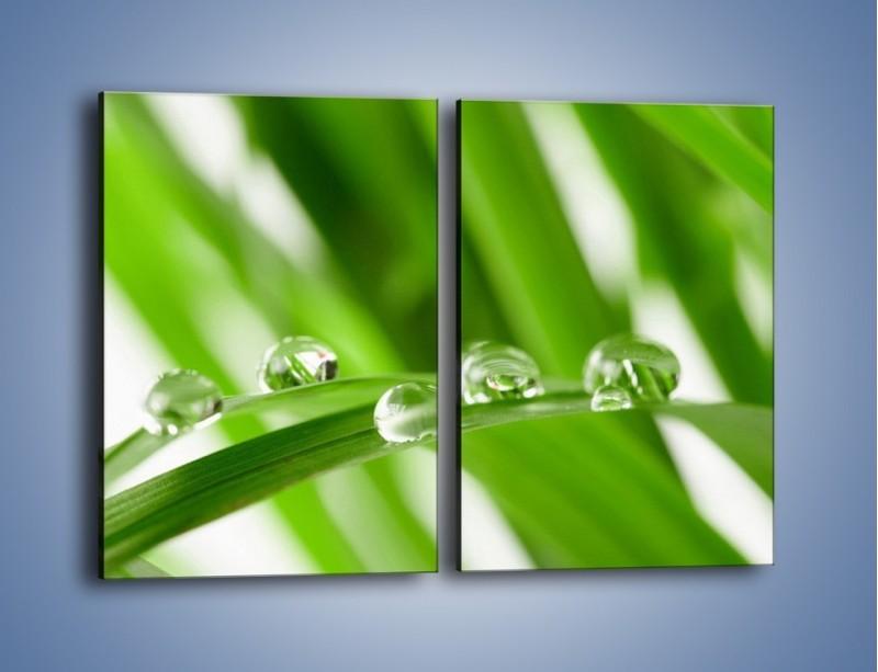 Obraz na płótnie – Krople rosy na liściu – dwuczęściowy prostokątny pionowy KN339