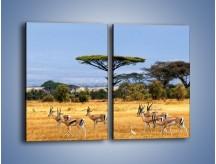 Obraz na płótnie – Antylopy w słonecznej afryce – dwuczęściowy prostokątny pionowy Z003