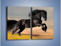 Obraz na płótnie – Czarny koń w galopie – dwuczęściowy prostokątny pionowy Z008