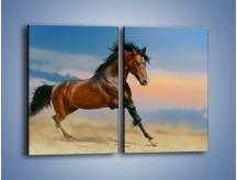 Obraz na płótnie – Brązowy koń na pustyni – dwuczęściowy prostokątny pionowy Z011