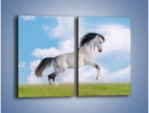 Obraz na płótnie – Białe obłoki i koń – dwuczęściowy prostokątny pionowy Z019