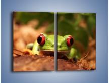 Obraz na płótnie – Bystre oczka małej żabki – dwuczęściowy prostokątny pionowy Z023