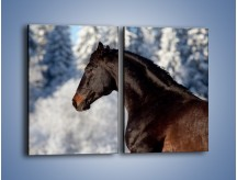 Obraz na płótnie – Brązowy ogier na zimowym spacerze – dwuczęściowy prostokątny pionowy Z056