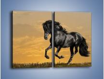 Obraz na płótnie – Bieg z koniem po polanie – dwuczęściowy prostokątny pionowy Z057
