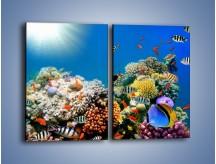 Obraz na płótnie – Fauna i kolorowi towarzysze – dwuczęściowy prostokątny pionowy Z116