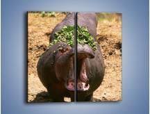 Obraz na płótnie – Hipopotam u dentysty – dwuczęściowy prostokątny pionowy Z117