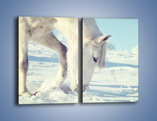 Obraz na płótnie – Arab w śnieżnym puchu – dwuczęściowy prostokątny pionowy Z144
