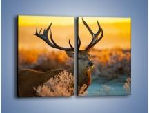 Obraz na płótnie – Ciężkie poroże jelenia – dwuczęściowy prostokątny pionowy Z165