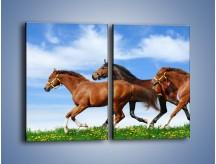 Obraz na płótnie – Galopujące stado brązowych koni – dwuczęściowy prostokątny pionowy Z172
