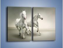 Obraz na płótnie – Dobrany duet arabów – dwuczęściowy prostokątny pionowy Z176