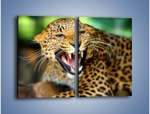 Obraz na płótnie – Jaguar z pazurem – dwuczęściowy prostokątny pionowy Z184