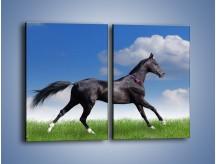 Obraz na płótnie – Dziki koń w biegu – dwuczęściowy prostokątny pionowy Z194