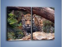 Obraz na płótnie – Jaguar w gotowości – dwuczęściowy prostokątny pionowy Z198