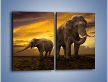 Obraz na płótnie – Ciekawość małego słonika – dwuczęściowy prostokątny pionowy Z212