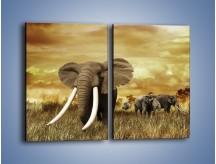 Obraz na płótnie – Drogocenne kły słonia – dwuczęściowy prostokątny pionowy Z214