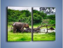 Obraz na płótnie – Kąpiel ze słoniem – dwuczęściowy prostokątny pionowy Z216