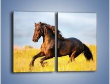 Obraz na płótnie – Dziki koń i jego mięśnie – dwuczęściowy prostokątny pionowy Z232