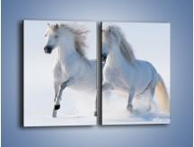 Obraz na płótnie – Gonitwa konna w bieli – dwuczęściowy prostokątny pionowy Z240