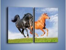 Obraz na płótnie – Czarny rudy i koń – dwuczęściowy prostokątny pionowy Z241