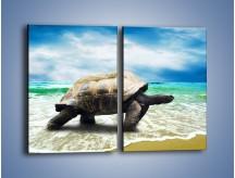 Obraz na płótnie – Jak tu nie kochać żółwi – dwuczęściowy prostokątny pionowy Z251