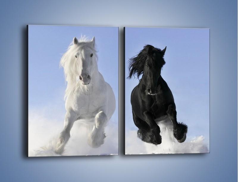 Obraz na płótnie – Czarno-biały wyścig konny – dwuczęściowy prostokątny pionowy Z263